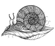 Vector illustration of a totem animal Snail on leaf in black and Stock Photo