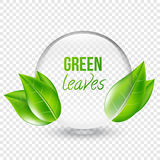 Vector illustration of transparent shere with green leaves for design, business cards. Transparent background. Royalty Free Stock Photography