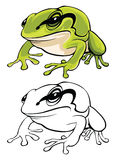 Vector illustration of tree frog Stock Photography