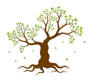 Vector illustration of tree with green leaves Royalty Free Stock Image