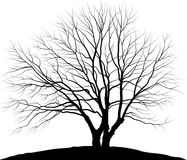 Vector illustration tree. Silhouette oak without leaves royalty free illustration