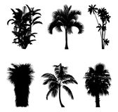 Vector illustration of tree silhouettes. Tropical trees and palm trees silhouettes for architectural compositions with backgrounds. Vector illustration Royalty Free Stock Photo