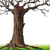Vector illustration. Tree. Royalty Free Stock Photo