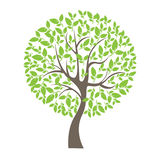 Vector illustration of tree on white background - Illustration Royalty Free Stock Photos