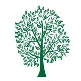 Vector illustration of tree on white background -. Illustrationr illustration of tree on white background - Illustration Royalty Free Stock Photo