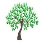 Vector illustration of tree on white background - Stock Image