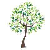 Vector illustration of tree on white background -. Illustrationr illustration of tree on white background - Illustration Stock Photography