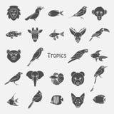 Vector illustration of tropical birds animals and fishes icon. Vector illustration of color tropical birds animals and fishes icon Royalty Free Stock Image