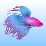Vector illustration of tropical fish-rooster Royalty Free Stock Photography