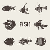 Vector illustration of tropical fishes icon. Vector illustration of brown tropical fishes icon Royalty Free Stock Image