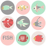 Vector illustration of tropical fishes icon. Vector illustration of tropical color fishes icon Royalty Free Stock Photos