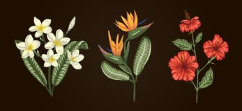 Vector illustration of tropical flower bouquets isolated on white background stock illustration