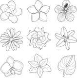 Vector illustration of tropical flowers set. Vector illustration of tropical flowers line set Stock Image