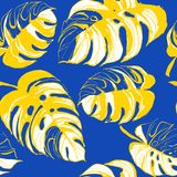 Tropical jungle floral seamless pattern background palm beach leaves. Stock Images