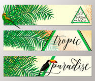 Vector illustration of tropical paradise banner collection with parrot, toucan, palm leaf, grunge effect, summer Stock Images