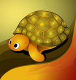 Vector illustration of turtle Royalty Free Stock Photo