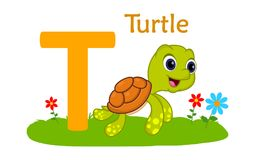 Animal alphabet T.T for tirtle. Vector illustration of turtle with letter t isolated on white background.T for turtle Stock Photo