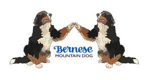Two Bernese Mountain Dog with raised paws. Vector illustration of two Bernese mountain dogs that raised their  paws to greet Royalty Free Stock Photo