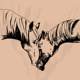 Vector illustration of two horse in the style of hand drawn Royalty Free Stock Photography