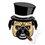 Pug in a hat smoking a cigar. royalty free illustration