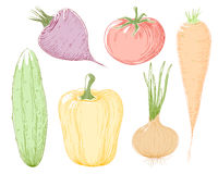 Vector illustration vegetables. Vector illustration vegetables in color Royalty Free Stock Photo