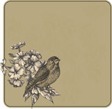 Vector illustration. Vintage background with flowers and birds, Royalty Free Stock Image