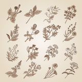 Vector illustration in vintage style. Collection of hand drawn medicinal, botanical and healing beauty herbs from garden. Botanical herbal plants, floral Stock Image