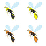 Vector illustration of a wasp Royalty Free Stock Images