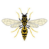 Vector illustration of a wasp. Top view. Stock Photo