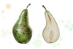 Vector illustration watercolor pear stock photos