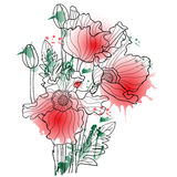 Vector illustration with watercolor poppy. Elegant floral element for design Royalty Free Stock Photography