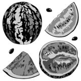 Vector illustration of a watermelon, half watermelon, a slice of watermelon. Black and white image. royalty free stock photography