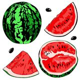 Vector illustration of a watermelon, half watermelon, a slice of watermelon. Color image. stock photo