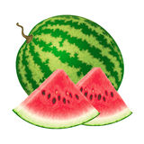 Vector illustration of watermelon. Isolated watermelon on white background. Vector illustration Royalty Free Stock Photos