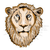 Vector illustration on white background. Detail of Lion`s head. Vector illustration of wild animal on white background vector illustration