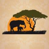 Vector illustration of wild elephants family in African sunset savanna with trees. stock illustration