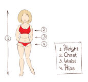 Vector illustration -- women's clothing sizes Stock Images
