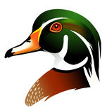 Vector illustration of wood duck. Realistic  illustration of  wood duck head in profile isolated Stock Photo