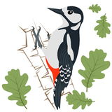 Vector Illustration of Woodpecker Stock Photo
