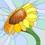 Vector illustration of yellow sunflower. Royalty Free Stock Photo
