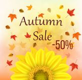 Vector illustration of an yellow sunflower with fall leaves on an autumn bokeh background. Ready elements with autumn sale -50% of. Vector illustration of an Royalty Free Stock Photography
