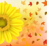 Vector illustration of an yellow sunflower with fall leaves on an autumn bokeh background. Ready elements with background It s aut. Umn time typography for your Stock Photos