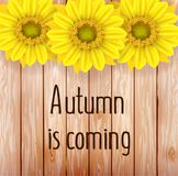 Vector illustration of an yellow sunflower with fall leaves on an autumn bokeh background. Ready elements with background Stock Image
