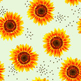 Vector illustration of yellow sunflower seamless pattern. Yellow sunflowers with black seeds on light green background Royalty Free Stock Photo