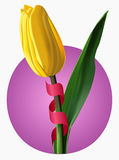 Vector illustration of yellow tulip Stock Photography