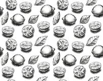 Sketch endless background with lemon royalty free stock photos