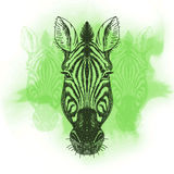 Vector illustration with zebra head Royalty Free Stock Photo