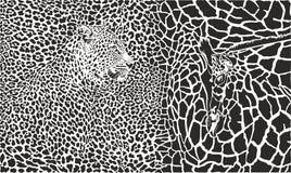 Vector illustrationBackground met luipaard en giraf Stock Foto's