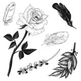 Vector illustratione rose, lavender, feathers and bay leaves set black and white isolated on white background for advertising vector illustration