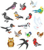 Set of birds. Vector illustrations of different birds drawn in cartoon style including several species Stock Images
